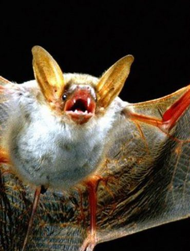 image-wide-bats-are-not-guilty-blog
