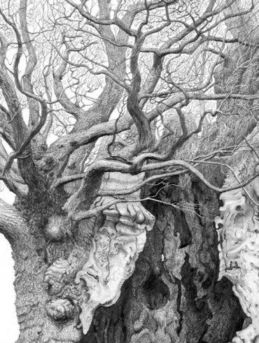 image-wide-royal-oaks